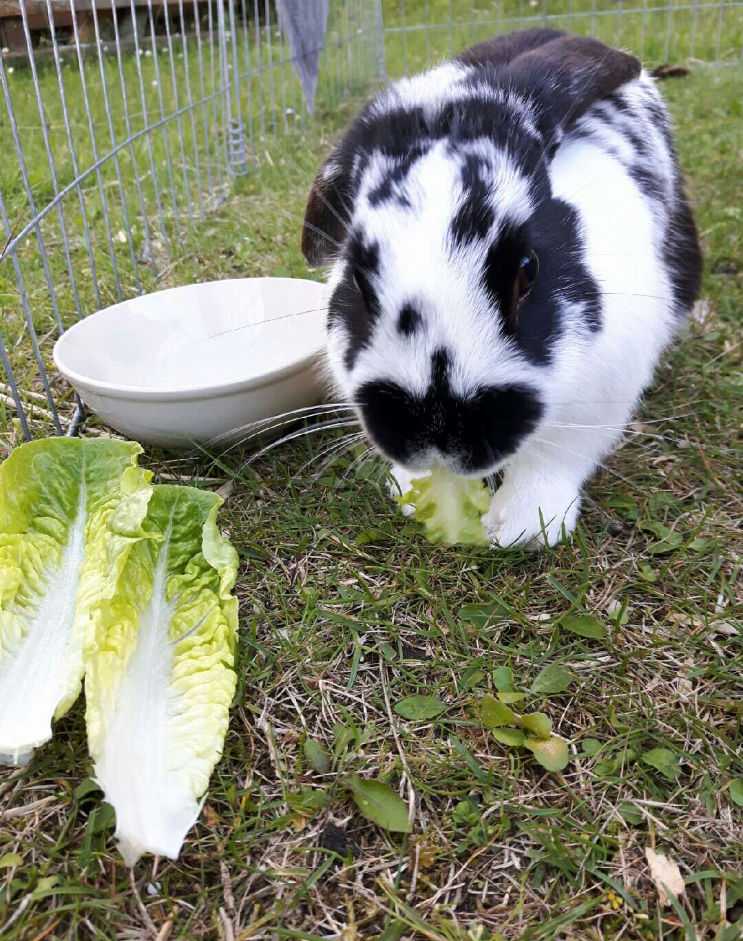 Kompost og kaninlort