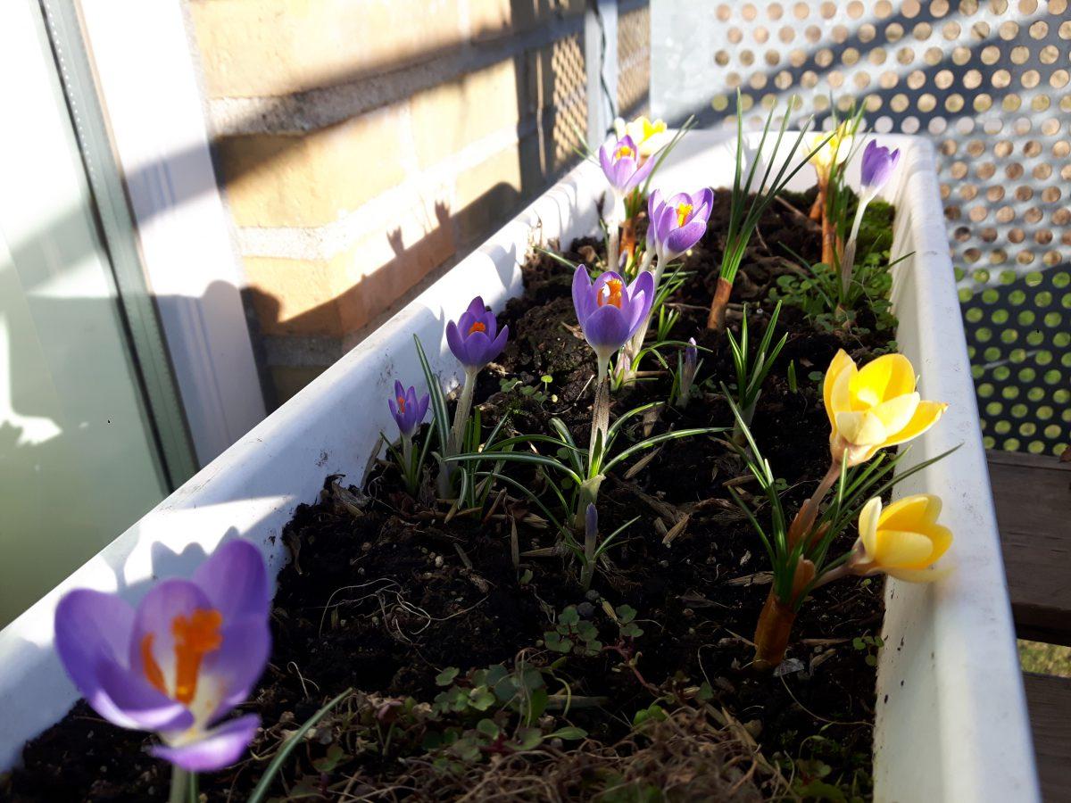Eksplosion af forår og arbejdsmani