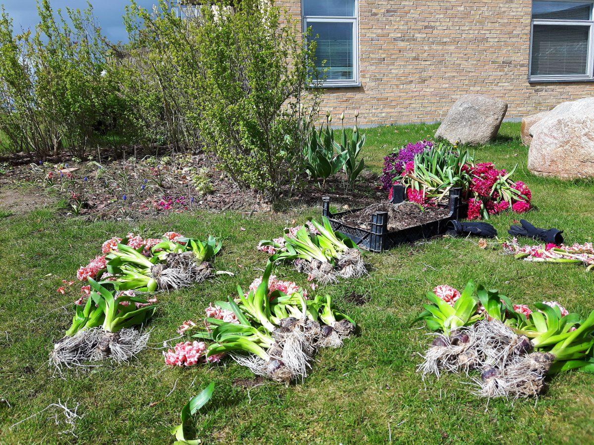 Ventetid i en hørm af hyacinter