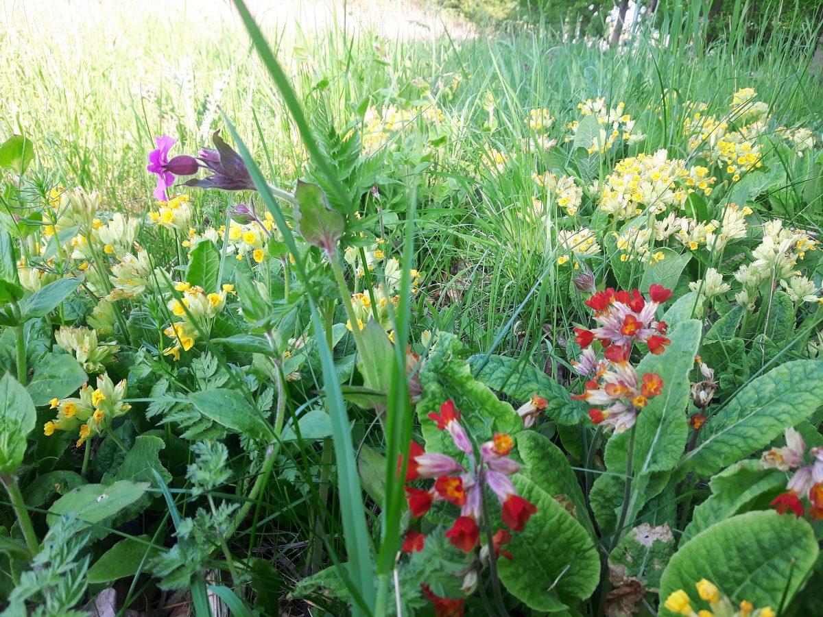 Jeg elsker de vilde blomster